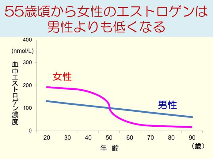 55歳頃から女性のエストロゲンは男性よりも低くなる
